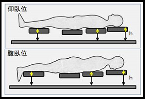 図1 仰臥位と腹臥位における部位別高さ測定